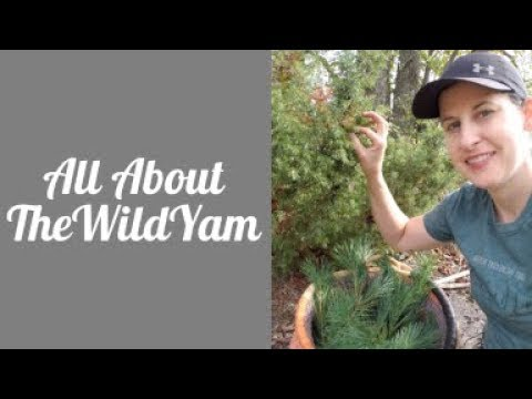 All About TheWildYam
