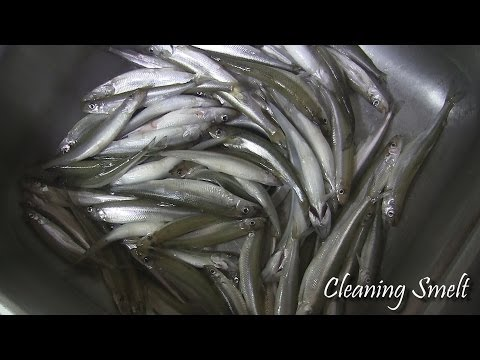How To Clean SMELT Quick & Easy