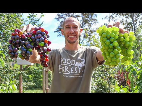 How to Grow Grapes, Complete Growing Guide