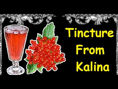 Tincture From Kalina / Book of recipes / Bon Appetit