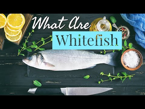 What is Whitefish? ~ History ~ Cooking ~ The Types and Much MORE