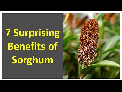 Health Benefits of Sorghum | 7 Surprising Benefits of Sorghum