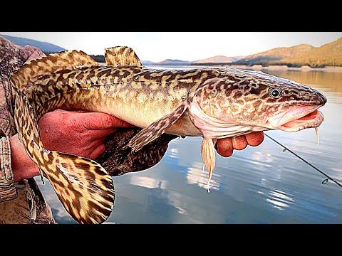 Burbot Catch & Cook!!! Van Life Fishing