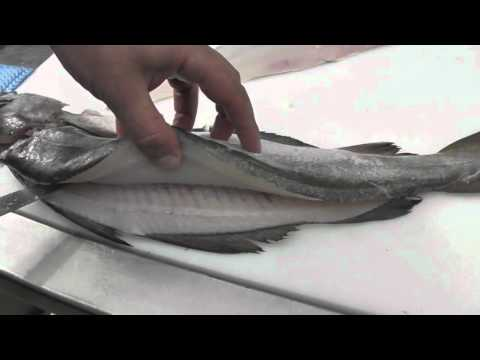 Passionate About Fish - How to Fillet Pollack