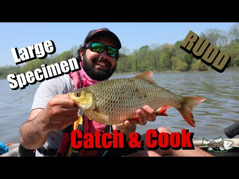 Bonus Catch and Cook - New Ontario Record RUDD?