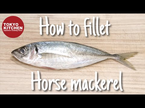 How to fillet Horse Mackerel.