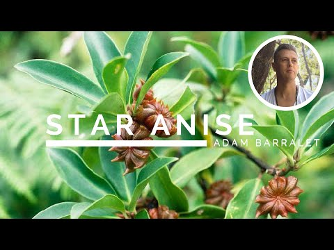 Star Anise - The Oil of Deep Mystery