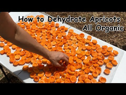 How to Dehydrate Apricots - All Organic with Pamela Mace